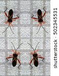 """Small photo of Pattern of black bugs with orange X lines (""""Machtima crucigera"""") in a alien world, it is a parasite of Barbados cherries (Malpighia emarginata) known as """"acerola"""" but here walks on a gray ceramic tile"""