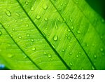 water drop on a leaf  closeup  | Shutterstock . vector #502426129