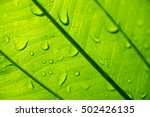 water drop on a leaf  closeup  | Shutterstock . vector #502426135