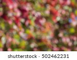 autumn nature blur bokeh... | Shutterstock . vector #502462231