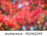 autumn nature blur bokeh... | Shutterstock . vector #502462249