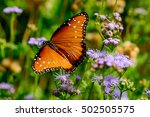 Queen Butterfly  Danaus...