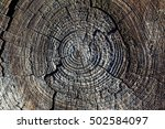 a cross section of the old tree | Shutterstock . vector #502584097