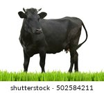 Cow On White Background. Farm...