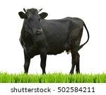 Cow On White Background. Farm...