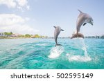 two dolphins jumping from the... | Shutterstock . vector #502595149