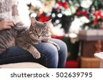 Woman Sitting On Sofa With Gre...