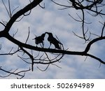 Silhouette Of Ravens Kissing O...