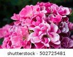 beautiful bouquet of pink roses ... | Shutterstock . vector #502725481