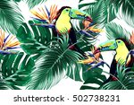toucan  exotic birds  tropical... | Shutterstock .eps vector #502738231