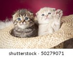 Stock photo two cute kittens sitting in hat 50279071