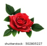 Stock photo red rose flower and leaves arrangement isolated on white 502805227