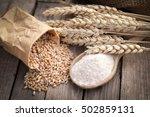 grain | Shutterstock . vector #502859131