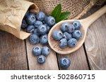 fresh blueberries | Shutterstock . vector #502860715