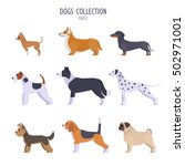 vector collection of  different ... | Shutterstock .eps vector #502971001