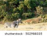 Two Zebra Rubbing Some Love On...