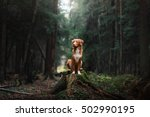 dog nova scotia duck tolling... | Shutterstock . vector #502990195