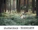 dog jack russell terrier  walk... | Shutterstock . vector #503001859