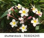 set almeria plume | Shutterstock . vector #503024245