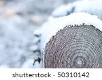 Closeup Of The End Of A Log In...