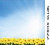 sunflower background   Shutterstock . vector #50312881