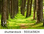 Green Grass And Kesiya Pine...