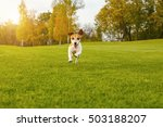Stock photo happy dog running to you directly into the camera relaxed coutryside pleasant atmosphere natural 503188207