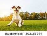crazy playfull cool dog dancing ... | Shutterstock . vector #503188399