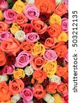 multicored wedding roses  a mix ... | Shutterstock . vector #503212135