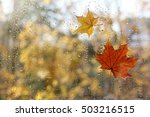 Raindrops And Fallen Maple...