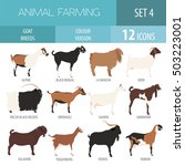 goat breeds icon set. animal... | Shutterstock .eps vector #503223001