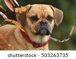 Puppy Puggle Dog Beagle Mops...