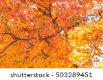 colorful autumn leaves | Shutterstock . vector #503289451