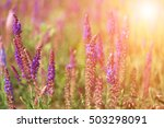 Small photo of Blossoming sage on a summer meadow