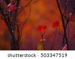 The Remaining Single Red Autum...