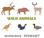 wild forest animals with wild... | Shutterstock .eps vector #503361607