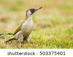Bird   Eurasian Green...