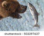 An Alaskan Brown Bear Catches A ...