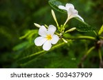 white and yellow tropical... | Shutterstock . vector #503437909