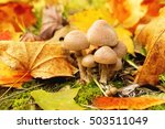 mushrooms on the ground with... | Shutterstock . vector #503511049