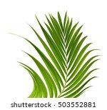 green palm leaves isolated on... | Shutterstock . vector #503552881