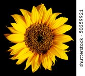 Sunflower Isolated On A Pure...