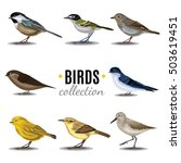 Different Birds Collection....