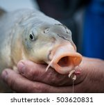 Fish In Hands With Bait In...
