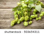 fresh green hops | Shutterstock . vector #503654311
