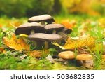 mushrooms on the ground with... | Shutterstock . vector #503682835