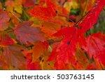 autumn leaves | Shutterstock . vector #503763145
