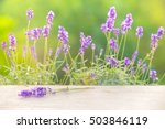 lavender bushes closeup on... | Shutterstock . vector #503846119