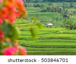 Rice Terraces  Banana Trees An...