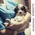 Sick Puppy In Animal Hospital....